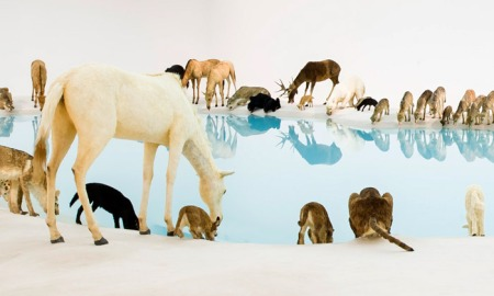 cai-guo-qiang-falling-back-to-earth-2